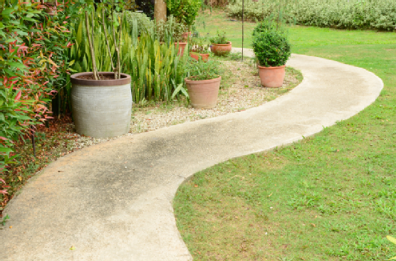 pathway in the garden