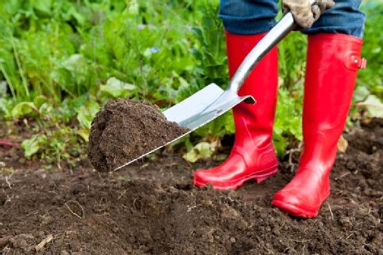 garden rental tools